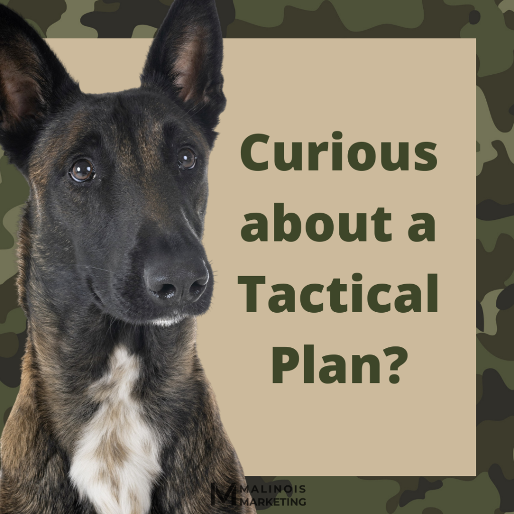 Image of a Belgian Malinois asking if you are curious about a digital marketing Tactical Plan